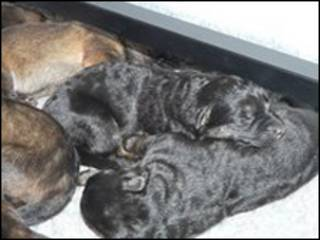 英国诺森比亚警署狗宝宝