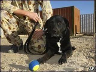A cadela Sabi de volta ao seu batalhão