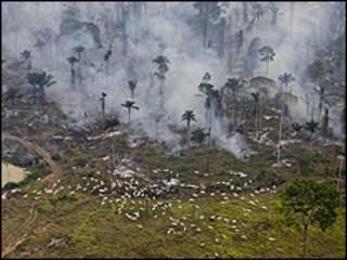 Deforestación en el Amazonas (foto Greenpeace)