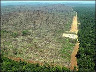 Deforestación del Amazonas. Foto de archivo cortesía de Greenpeace