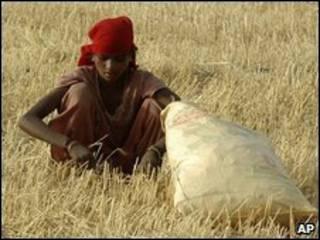 امرأة تعمل في أحد الحقول في الهند