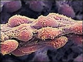 سلول های پوستی