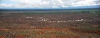 Bosque talado para producir aceite de palma en el norte de Perú