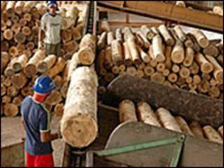 Madeira retirada da foresta amazônica