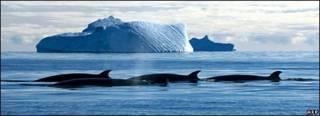 Антарктические льды