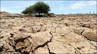 Sequía en el Chaco paraguayo