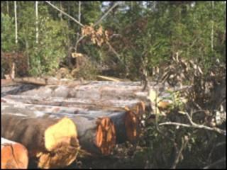Rừng đầu nguồn bị tàn phá (ảnh minh họa)