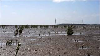 Nước biển lấn vào đồng ruộng