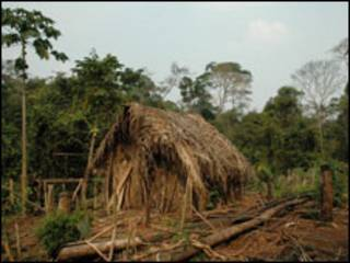 Casa do 'Homem do Buraco' (foto:@www.survivalinternational.org)