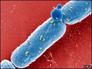 Bactéria causadora do antraz (SPL)