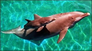 Delfín y su cría
