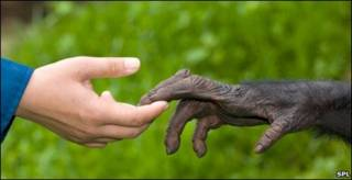 دست شامپانزه و انسان
