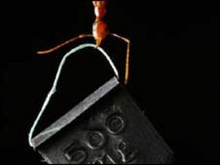 """نملة تحمل """"أثقالا"""""""