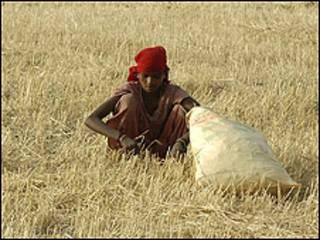 agricutlure
