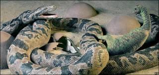 Reconstrucción de ataque de serpiente contra dinosaurio recién nacido