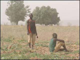 Wasu manoma a jihar Kano, Nijeriya