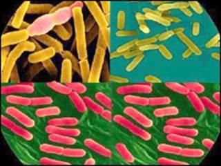 जीवाणु का मिश्रण