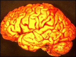 Мозок дає команду різним ділянкам виконувати різні задачі