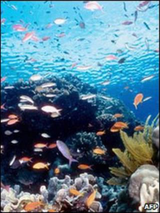 Recife de coral (arquivo)