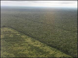 Deforestación del Chaco (Foto: Guyra Paraguay)