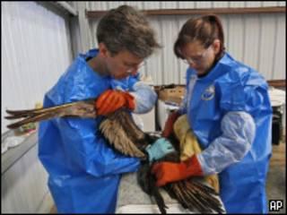 Медики чистят птицу от нефти