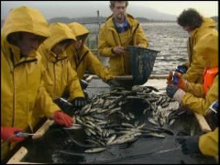 渔民分拣鱼