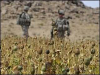 سربازان ناتو در مزرعه خشخاش در افغانستان