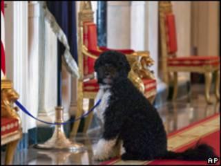 Bo, perro de Obama