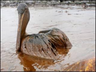 """Американські політики називають витік нафти """"найбільшою екологічною катастрофою у США"""""""