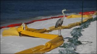 Цапля на пляже Пенсаколы
