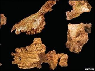 Fóssil encontrado pelos cientistas da Universidade de Michigan (foto: Nature)