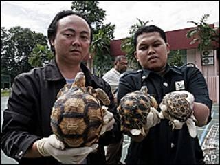 Agentes muestran las tortugas incautadas