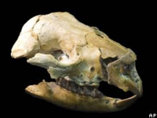 Avustralya'da bir mağarada bulunan fosiller
