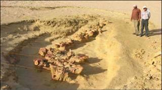 Escavações do fóssil da baleia (Foto: Prof. Philip Gingerich)