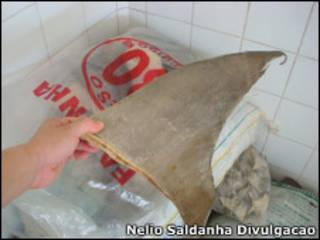 Barbatanas apreendidas na Sigel (Foto: Nélio Saldanha / Divulgação)