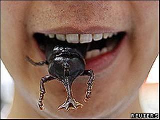 Boca con insecto