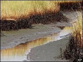 التلوث بسبب تسرب النفط في خليج المكسيك