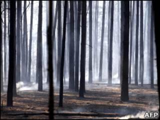 Лес под Воронежем