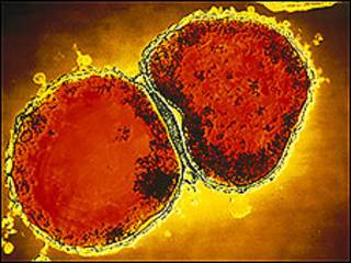 बैक्टीरिया