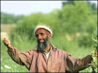 افغان بزګر