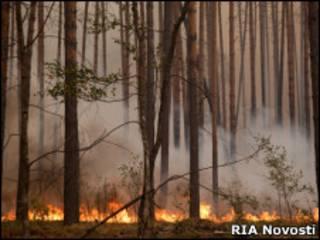 Горящий лес в Рязанской области
