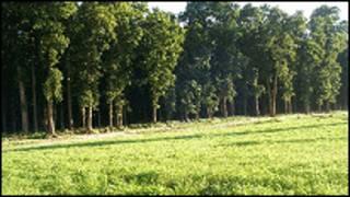 बाक्लिंदै र पातलिंदै गएको वन