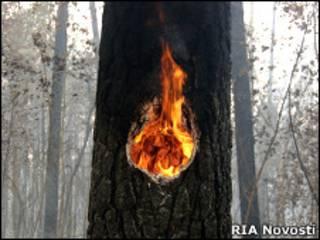 Горящее дерево в лесу в районе Тольятти (1 августа 2010 года)