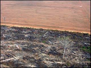 Deforestación y tierras de cultivo en Brasil. Foto de Greenpeace.
