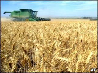 Комбайны собирают зерно в США