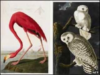 """كتاب """"طيور أمريكا"""""""