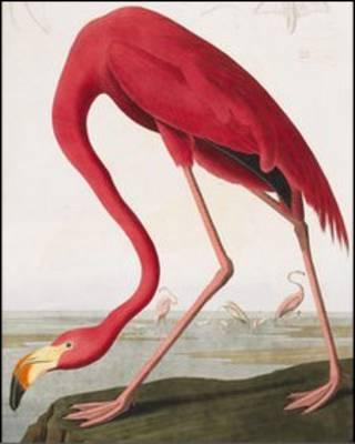 کتاب پرندگان آمریکا