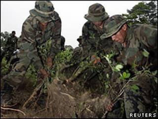 Боливийские солдаты выкорчевывают плантации коки