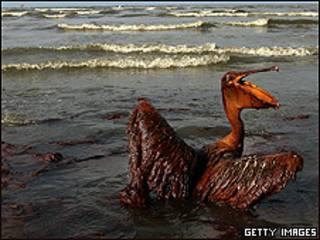 Vazamento no Golfo do México