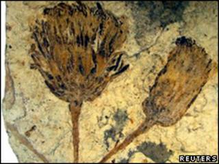 Fósil hallado en la Patagonia